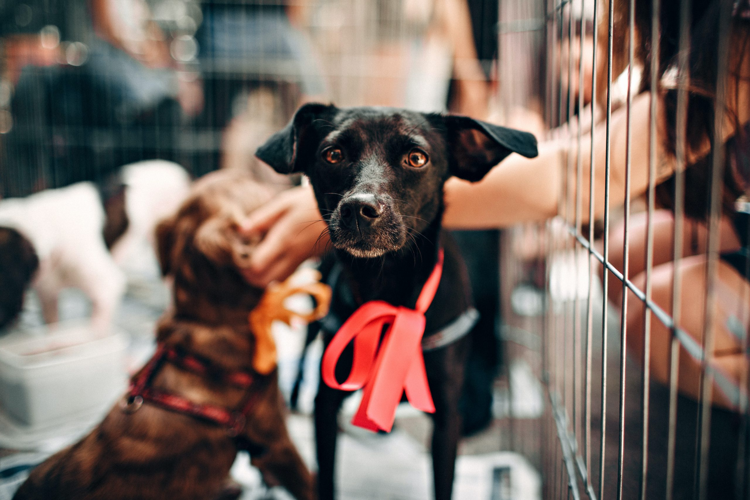Picking The Right Type and Size Crate For Your Dog